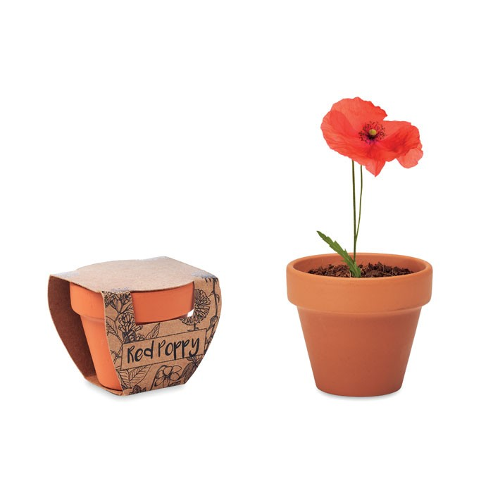 Terracotta pot 'poppy'